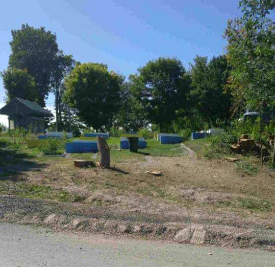 Trees removed as part of Beaverton Harbour project