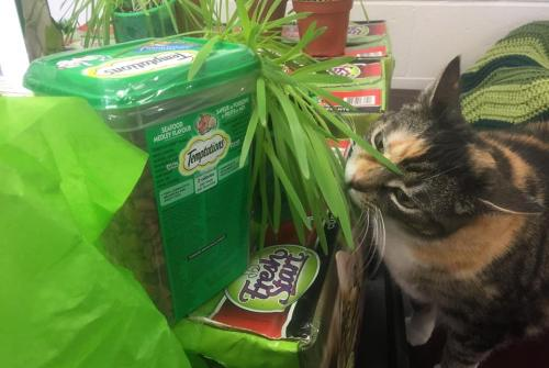 Cannington resident delivers 'St. Catrick's Day' present to Brock animal shelter