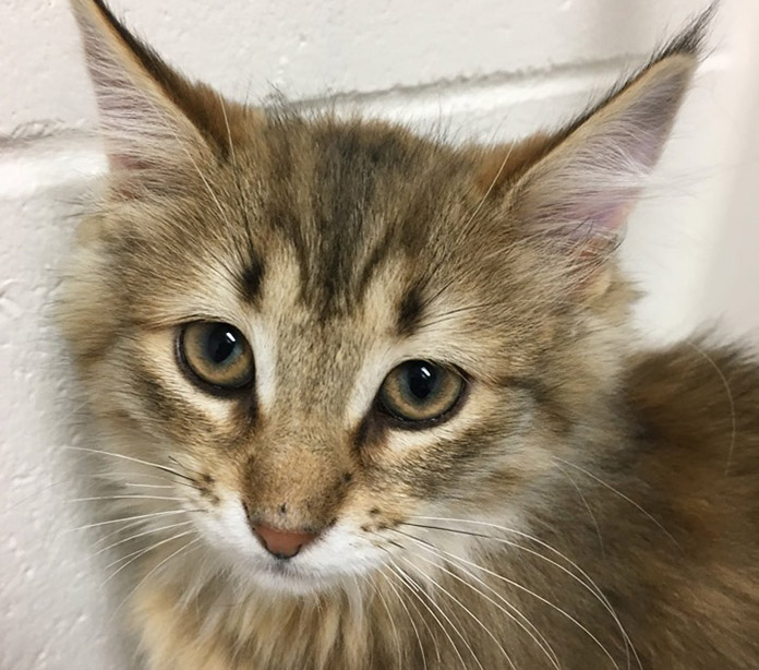 Animal shelter in need of foster homes for cats, kittens