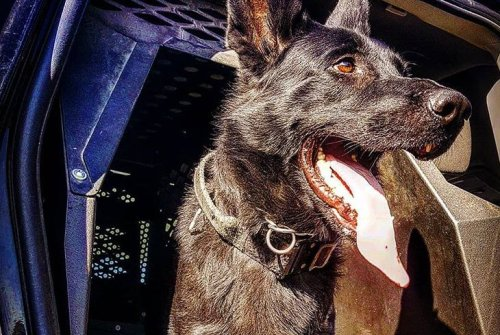Oshawa man charged after police dog allegedly assaulted