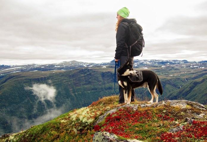dog hike