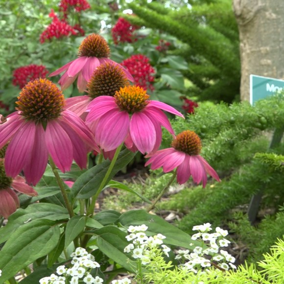 Around the Gardens with Mitzy Mills-Barringer