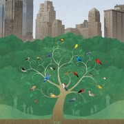 Film Streaming | Birders: The Central Park Effect