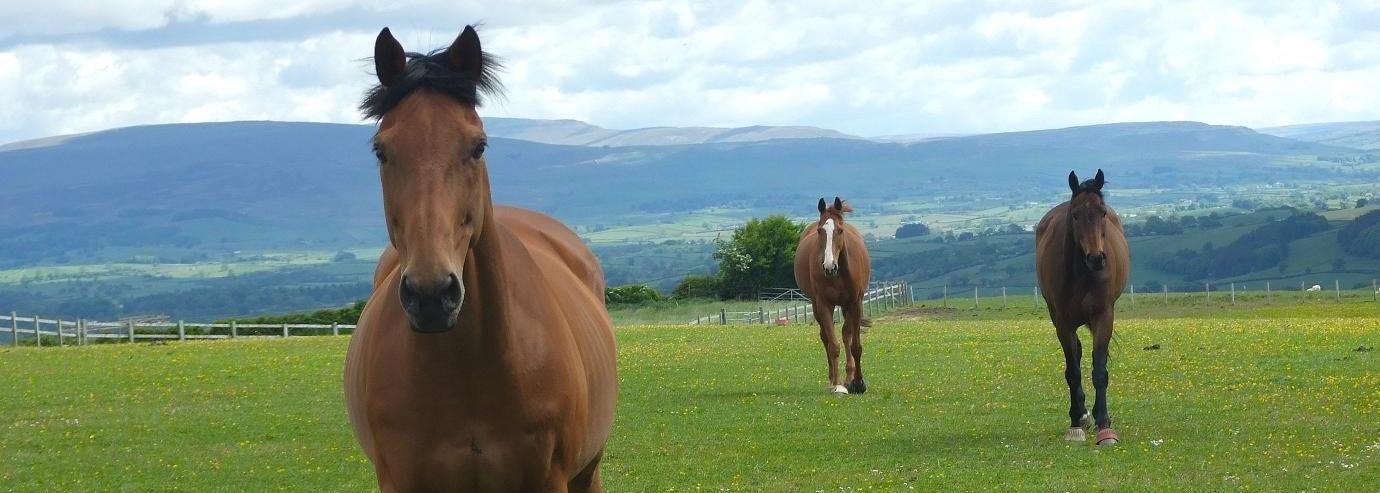 Photo of horses at TRC