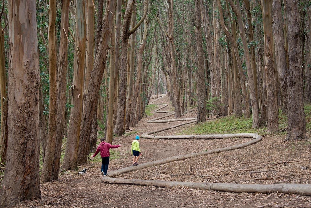 Presidio National Park Trails: Love Lane - Wood Line by Andy Goldsworthy