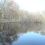 Blackbird State Forest- Meadows Tract