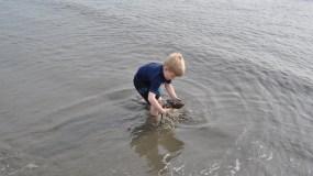 Flip a Horseshoe Crab
