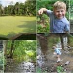 Brandywine Springs Park