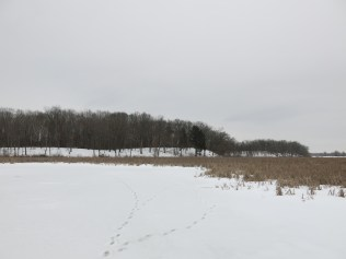 Walking across The Fen to the Tamarack Bog