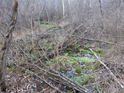 Pressed for time, the DNR sometimes just cuts and poisons the buckthorn