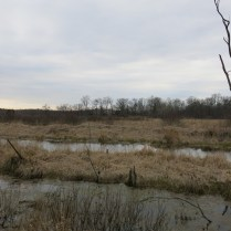 This country estate is literally surrounded by a moot dredged from the wetlands.