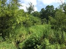 Hardscrabble Creek
