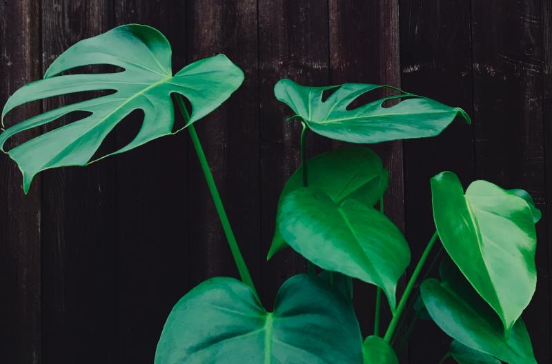 expensive plants