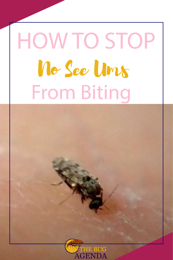 how to stop no see ums from biting you