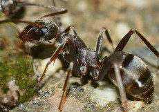 Cool facts about ants