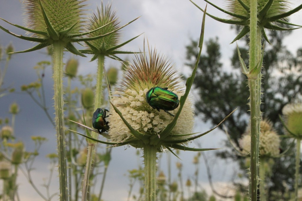 Shiny metallic beetles