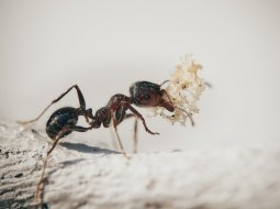 What is the best indoor ant killer