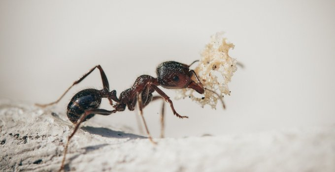 What is the best indoor ant killer