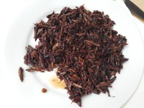chapulines-sauterelles-mexique-the-bug-trotters