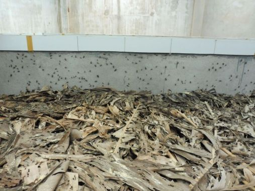 crickets farming in vietnam by the bug trotters