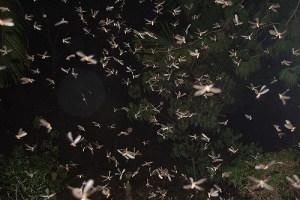 envol de termites ailes la nuit comment les collecter