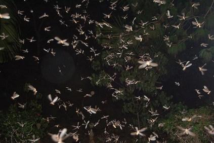 envol de termites ailes la nuit