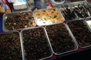My opinion on Bangkok edible insects, the bug trotters