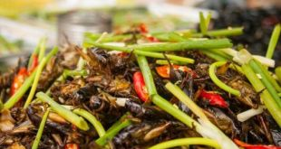 Les grillons à la cambodgienne