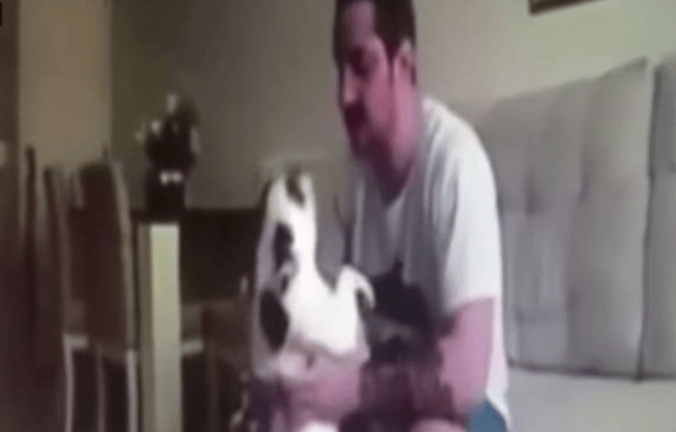 abused_bulldog