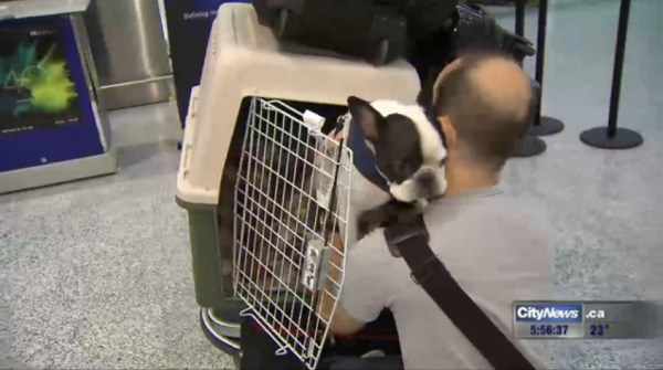 pilot saves bulldog1