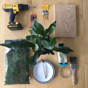 Equipment to mount your own fern