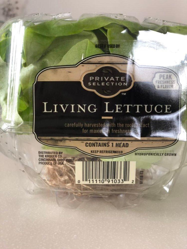 Living lettuce (butter lettuce) for lettuce wraps