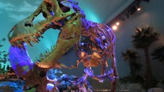 Dinosphere.