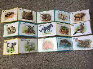 Wildlife Phonics 2