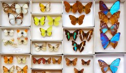 Dig_Peabody_Butterflies-CC