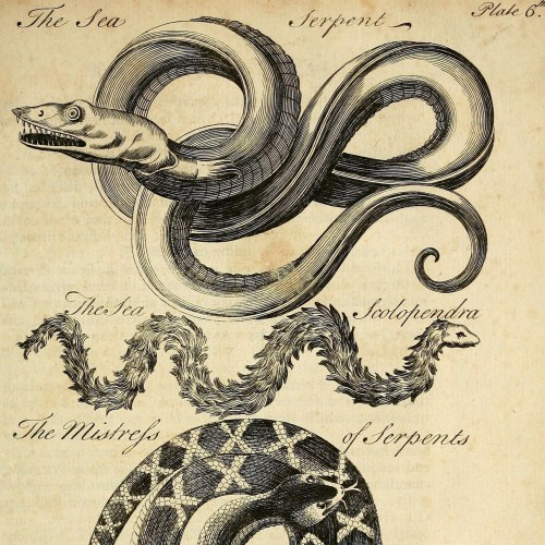 The Little King of Serpents: A Basilisk in the Archives