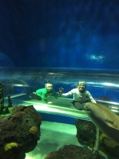 Kids climbing through tube to get better look at fish