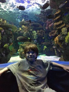 Aiden just hanging out in front of the fish tank