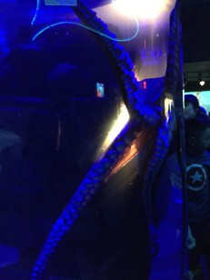 The Octopus moving through the tank