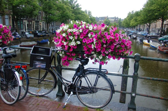 Amsterdam city guide - The Camelia