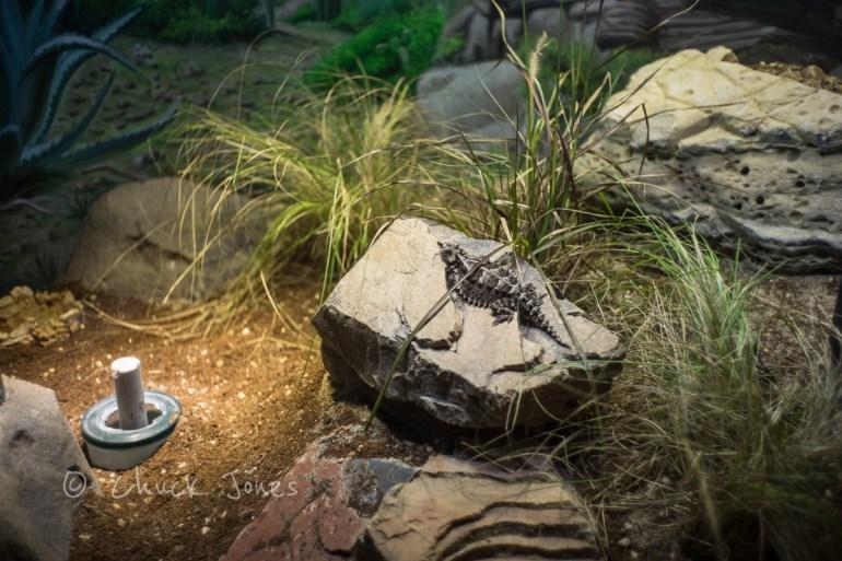 Mexican Lizard - At The Zoo Series - A7R, Leica 35mm Summicron.