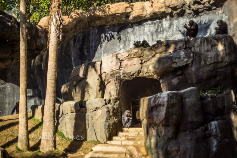 """""""Planet For The Apes"""" - At The Zoo Series - A7R, Leica 35mm Summicron."""