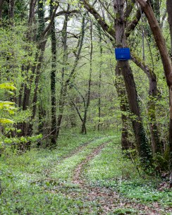 Hunting for Yves Klein?