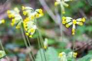 Woodland flower