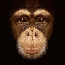 Scientists put human gene into monkeys to make them smarter, human-like