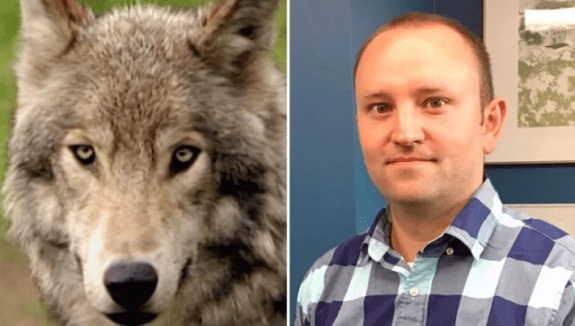 Survivors of Banff wolf attack recount how animal tried to drag man from tent in middle of night