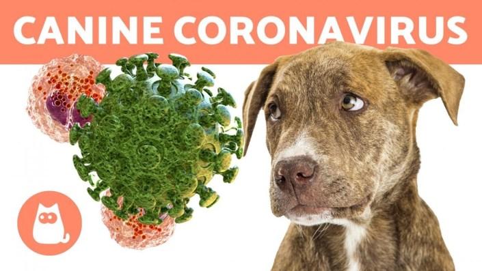 A new canine coronavirus found in Malaysia pneumonia patient
