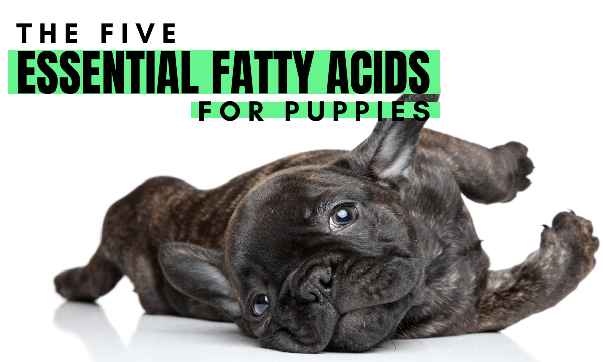 Essential Fatty Acids for Puppies