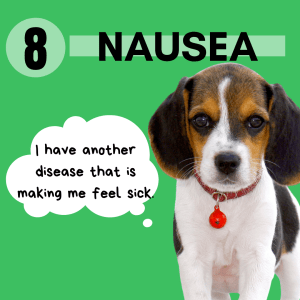 Many different diseases and conditions can make dog's go off food because they are nauseous. These dogs may or may not have been good eaters before. And though many of these diseases are associated with older dogs, they can occur at any age.