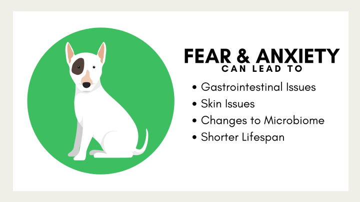 Health issues in dogs that can be caused by fear and anxiety.